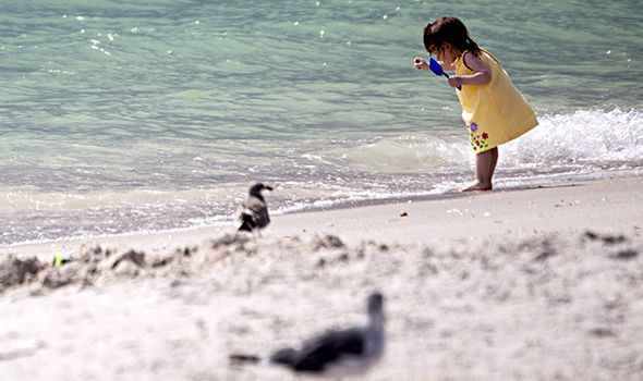 Girl on sarasota beach talkin smack to a seagull